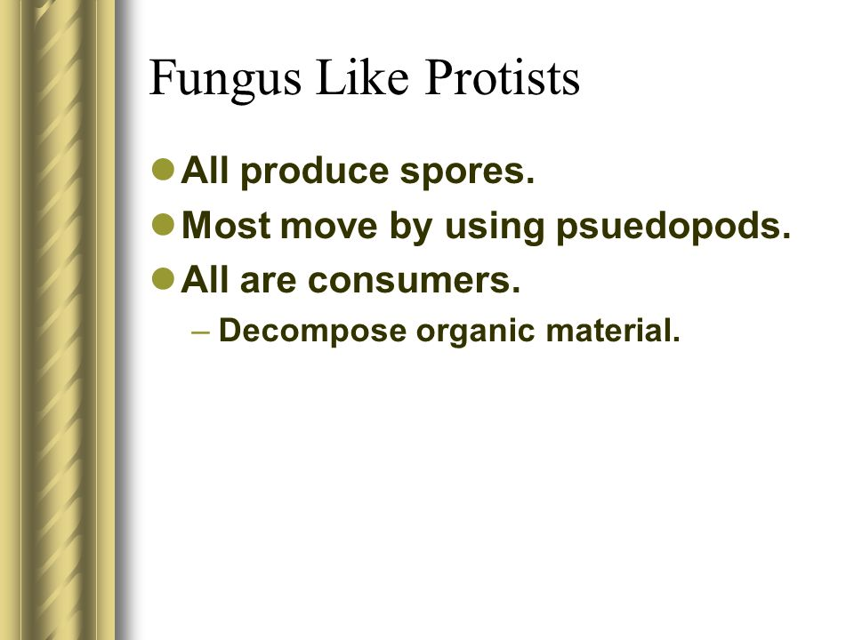 Fungus Like Protists All produce spores.