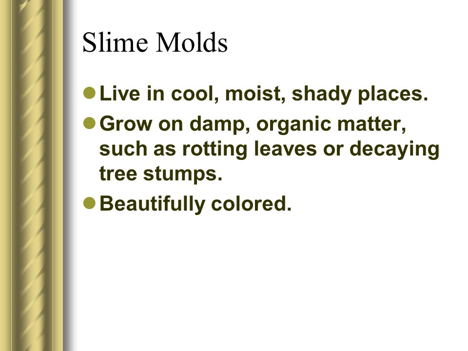 Slime Molds Live in cool, moist, shady places.