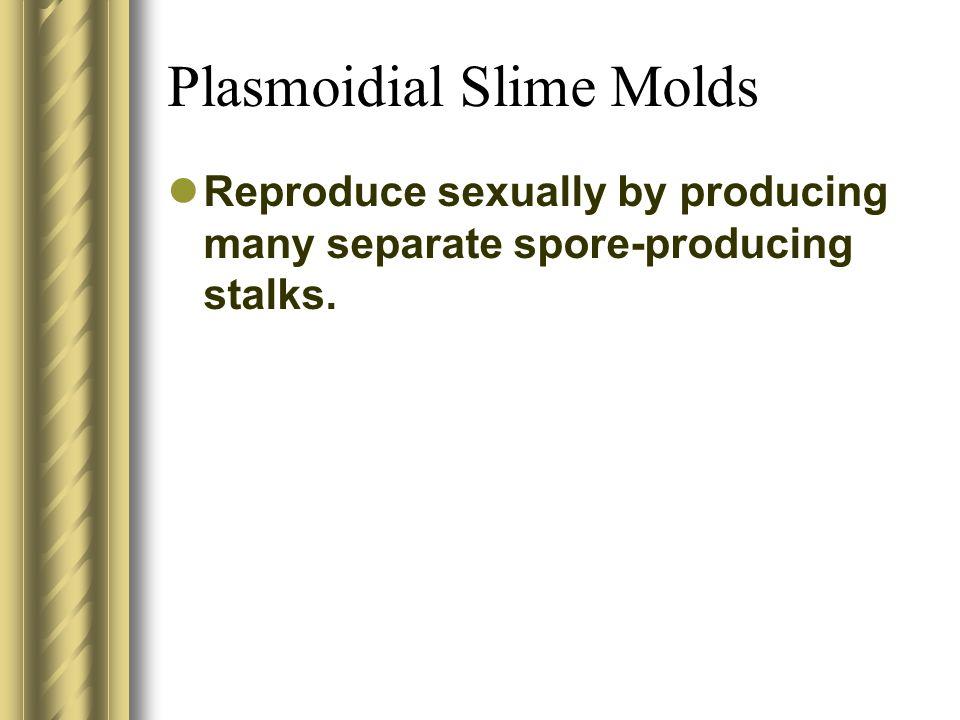 Plasmoidial Slime Molds