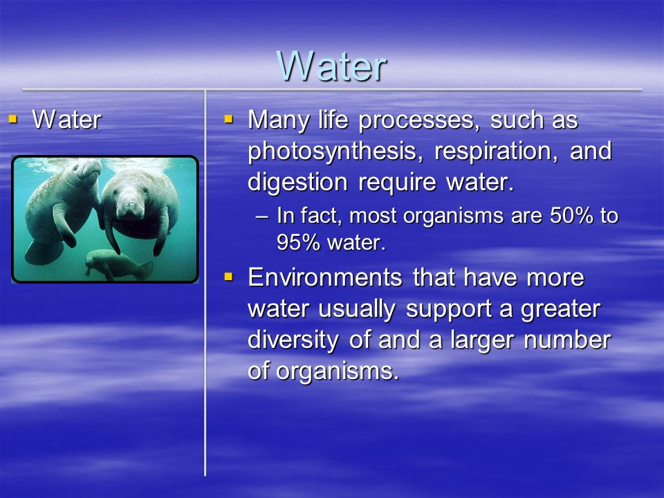 Water Water. Many life processes, such as photosynthesis, respiration, and digestion require water.