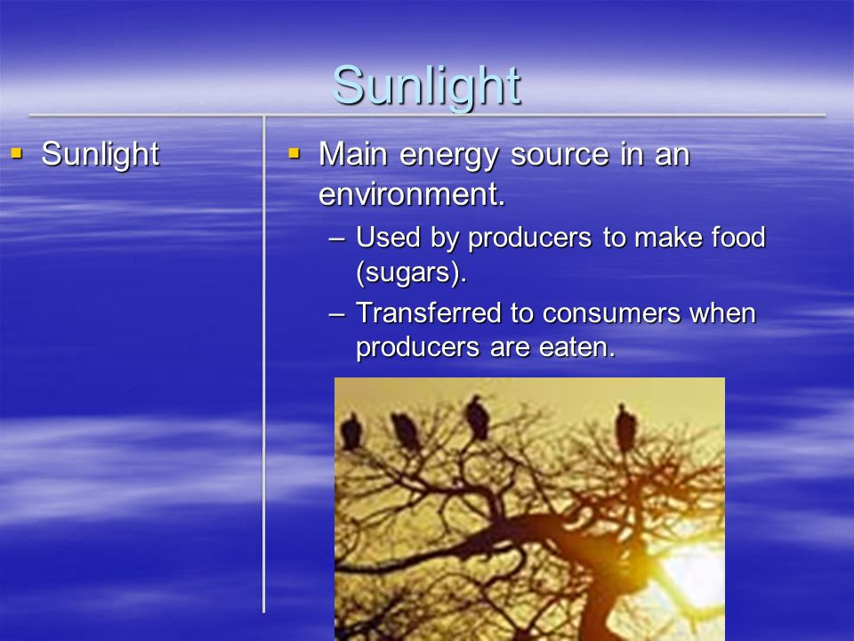 Sunlight Sunlight Main energy source in an environment.