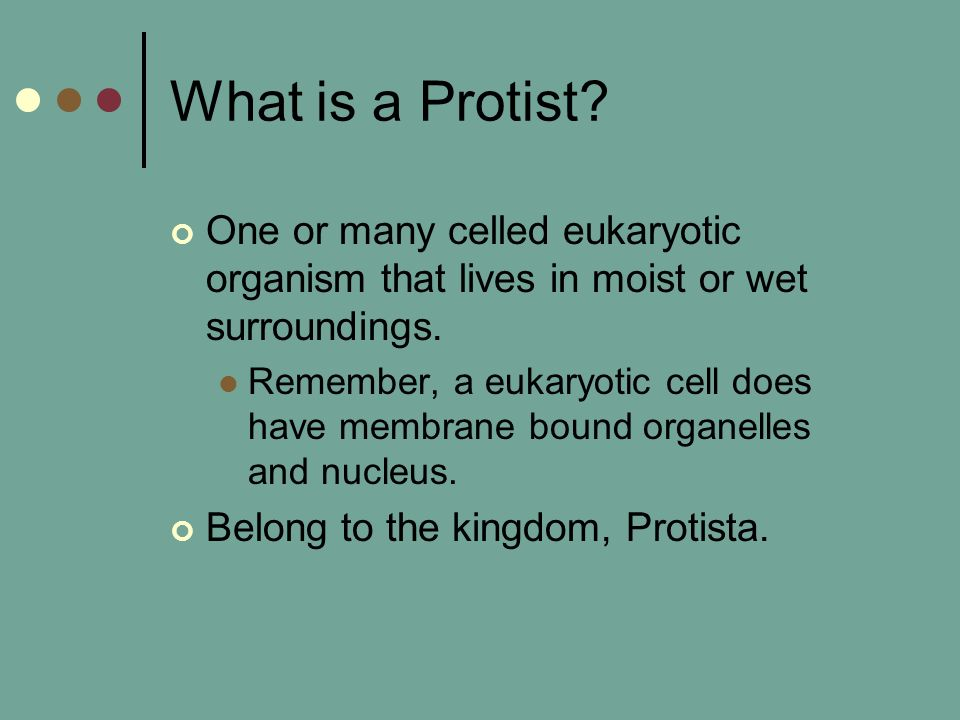 What is a Protist One or many celled eukaryotic organism that lives in moist or wet surroundings.