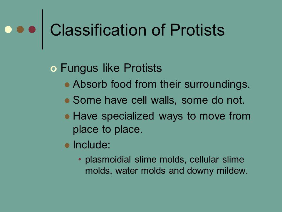 Classification of Protists