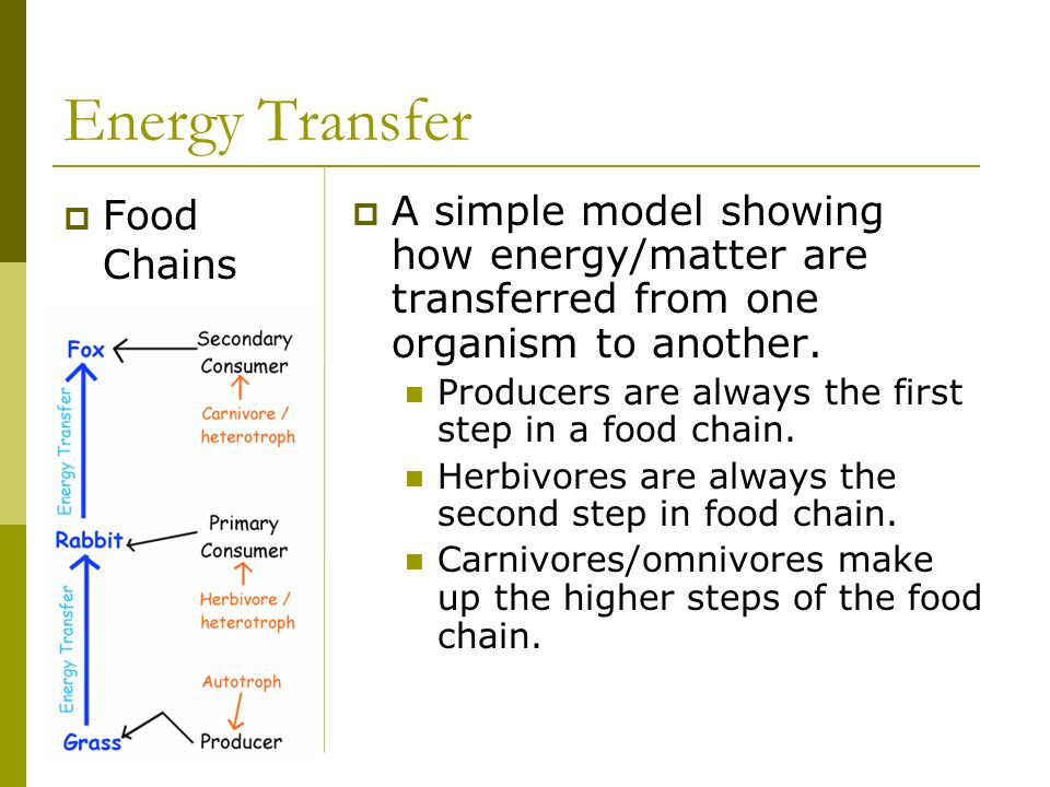Energy Transfer Food Chains
