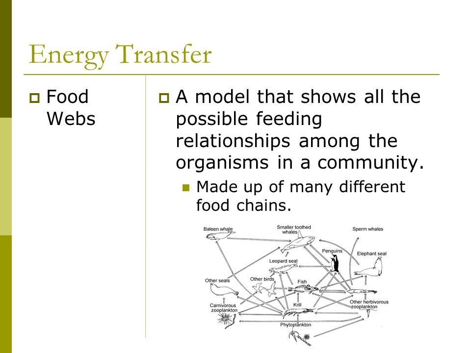 Energy Transfer Food Webs
