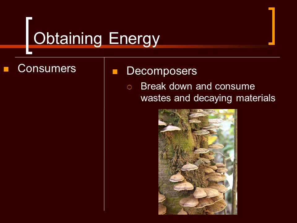 Obtaining Energy Consumers Decomposers