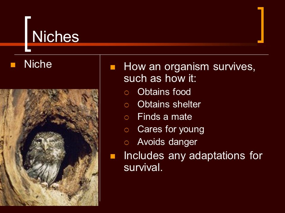 Niches Niche How an organism survives, such as how it: