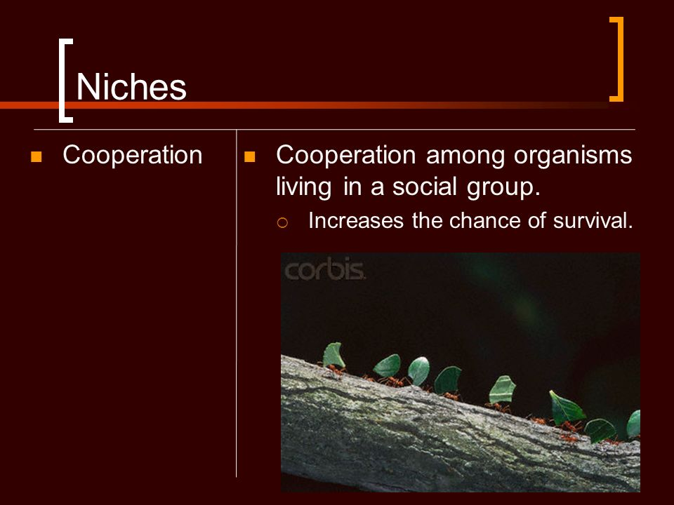 Niches Cooperation. Cooperation among organisms living in a social group.