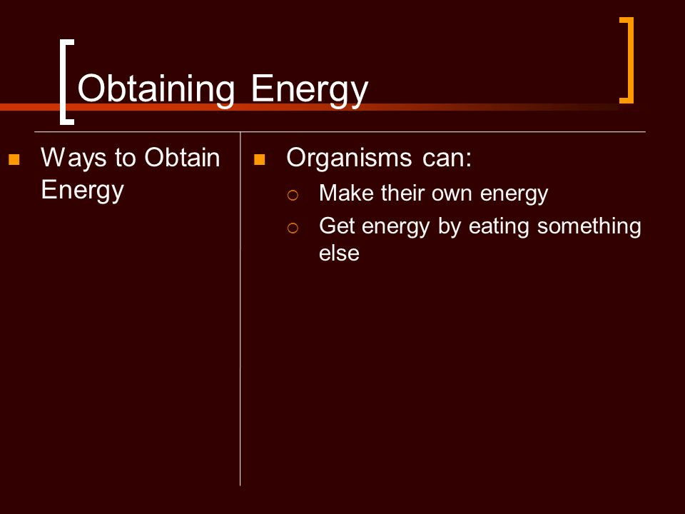 Obtaining Energy Ways to Obtain Energy Organisms can:
