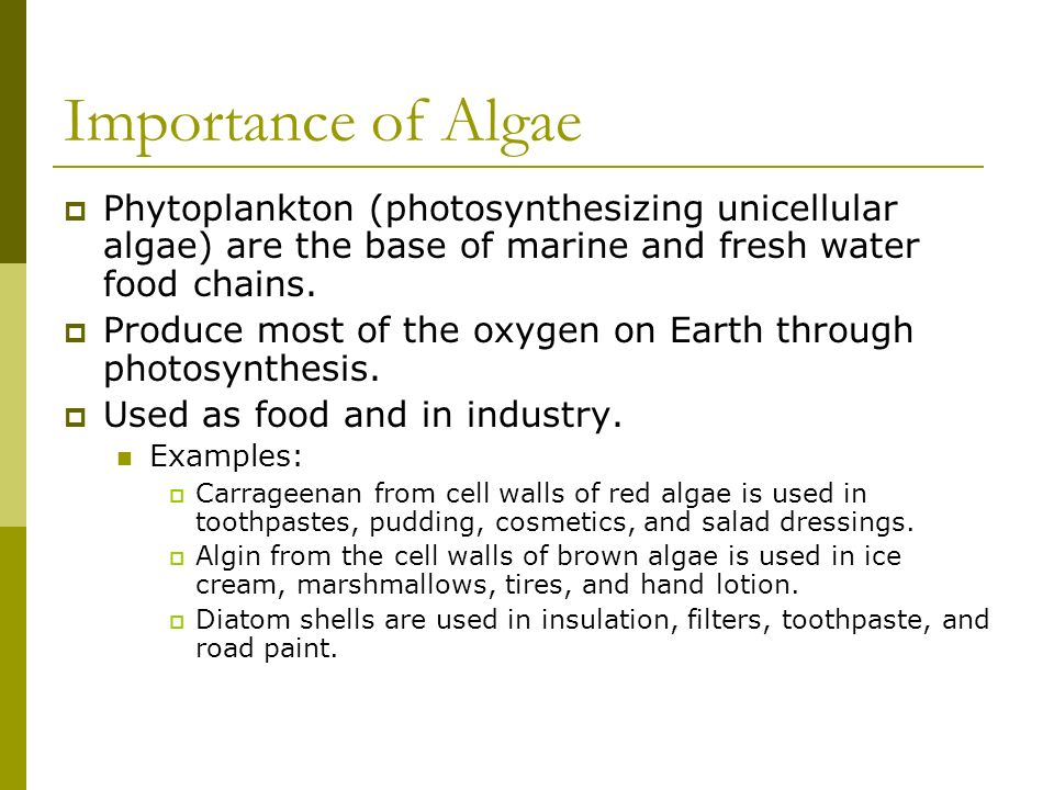 Importance of Algae Phytoplankton (photosynthesizing unicellular algae) are the base of marine and fresh water food chains.