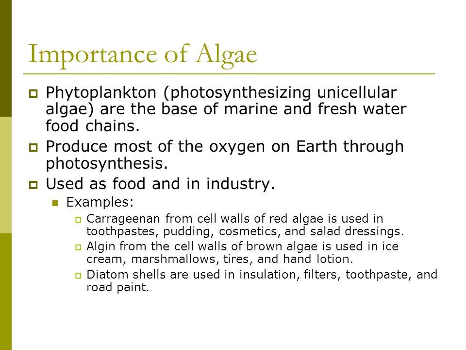 Importance of Algae Phytoplankton (photosynthesizing unicellular algae) are the base of marine and fresh water food chains.