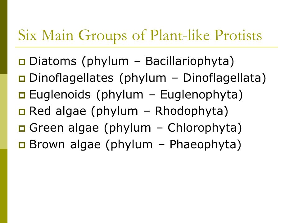 Six Main Groups of Plant-like Protists