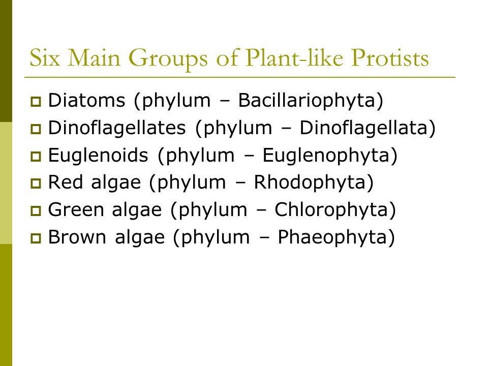 Six Main Groups of Plant-like Protists