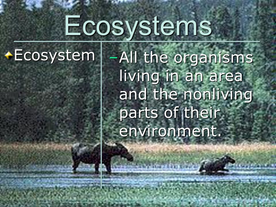 Ecosystems Ecosystem.