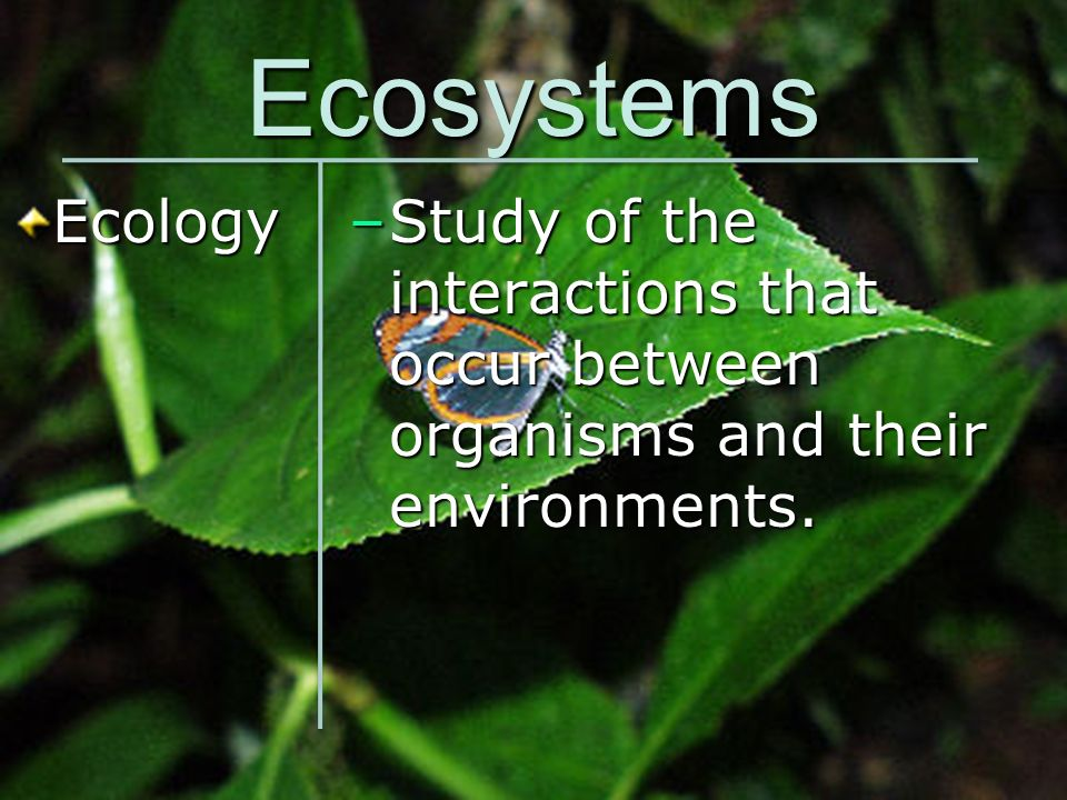 Ecosystems Ecology Study of the interactions that occur between organisms and their environments.