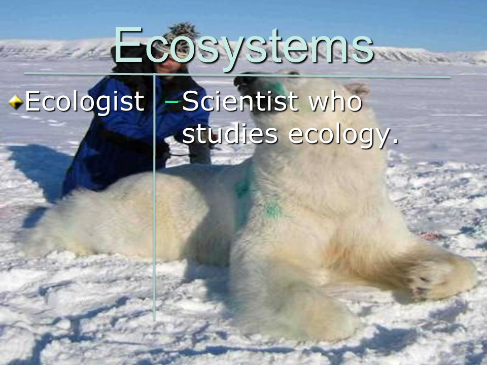 Ecosystems Ecologist Scientist who studies ecology.