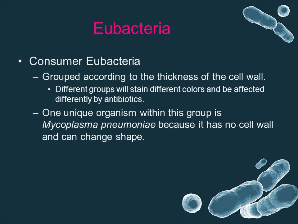 Eubacteria Consumer Eubacteria