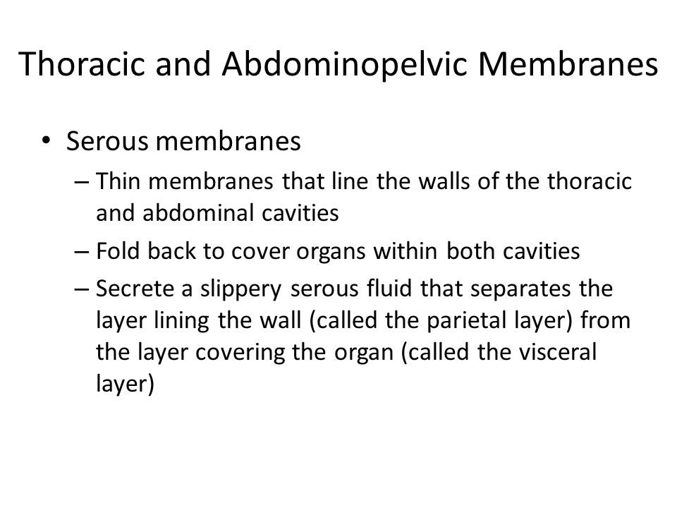 Thoracic and Abdominopelvic Membranes