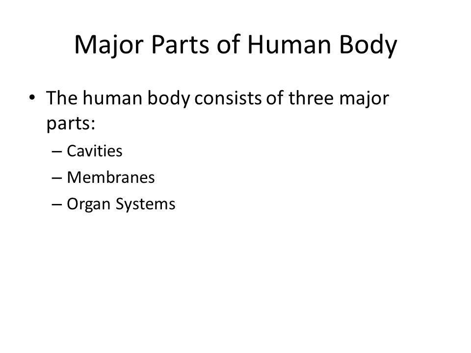 Major Parts of Human Body