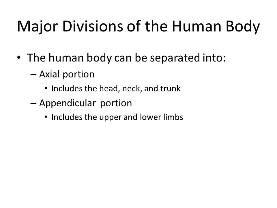 Major Divisions of the Human Body