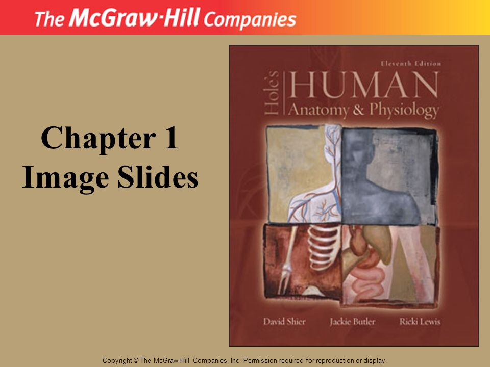 Chapter 1 Image Slides. Copyright © The McGraw-Hill Companies, Inc.