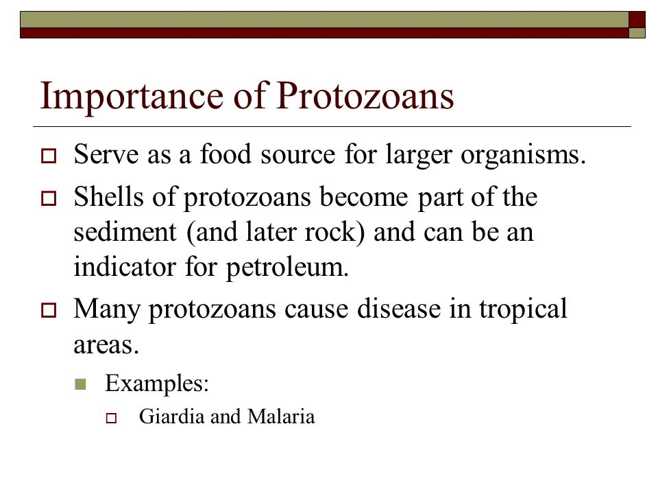 Importance of Protozoans