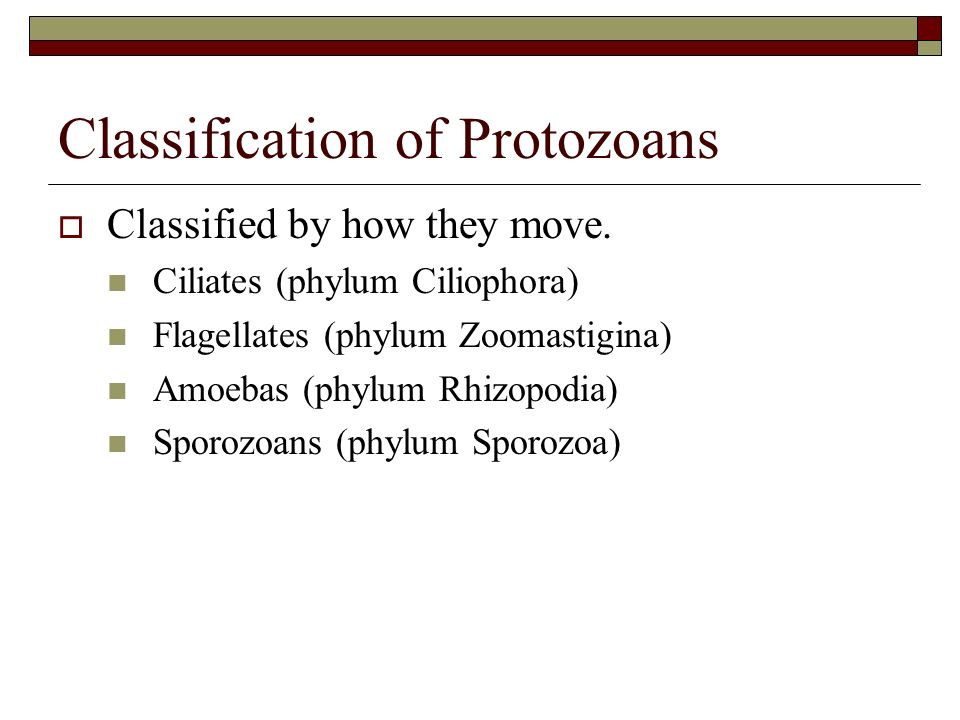 Classification of Protozoans