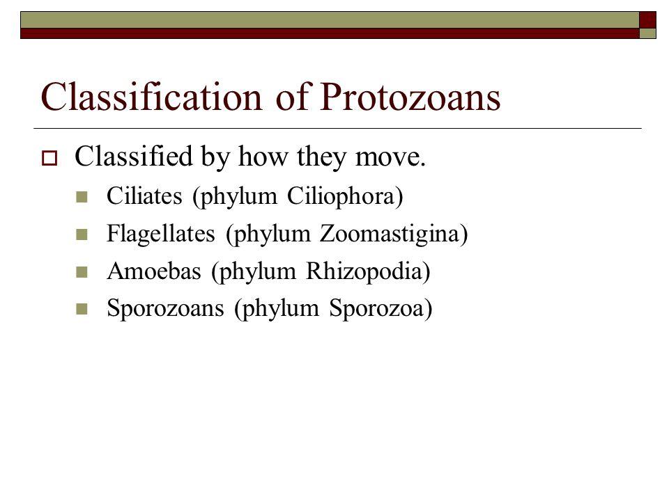 Classification of Protozoans