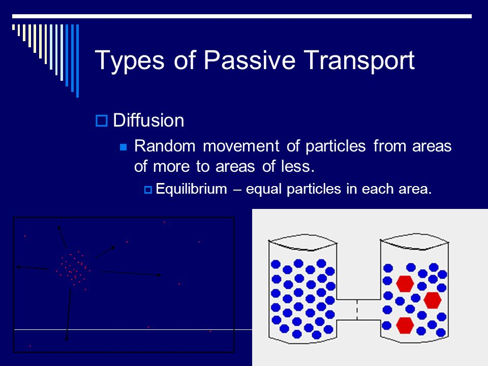 Types of Passive Transport