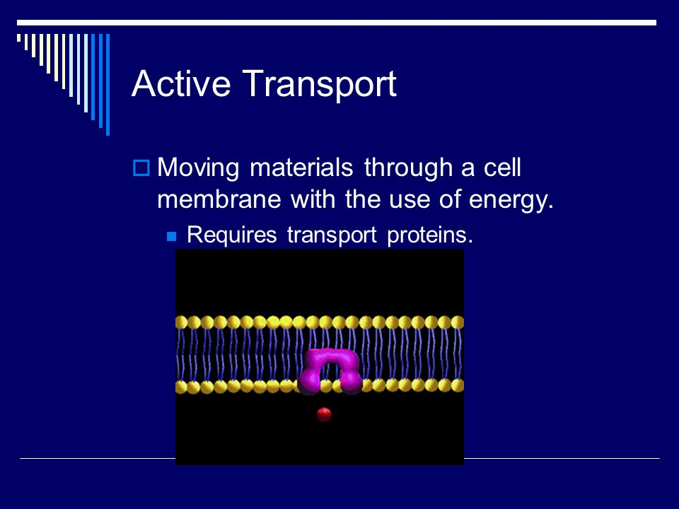 Active Transport Moving materials through a cell membrane with the use of energy.