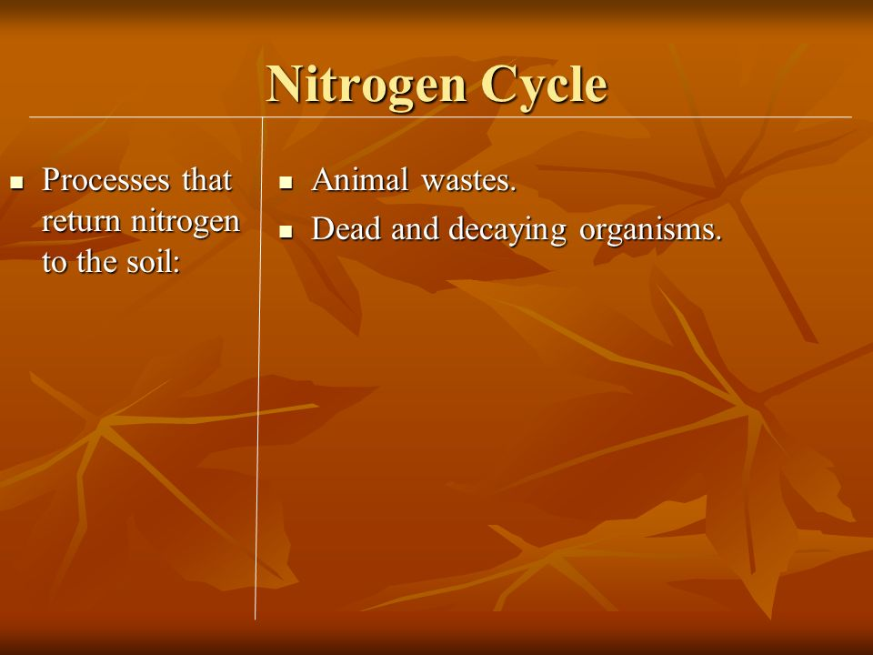 Nitrogen Cycle Processes that return nitrogen to the soil: