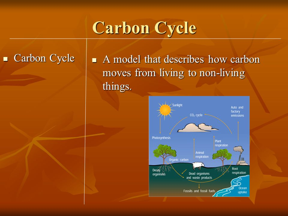 Carbon Cycle Carbon Cycle