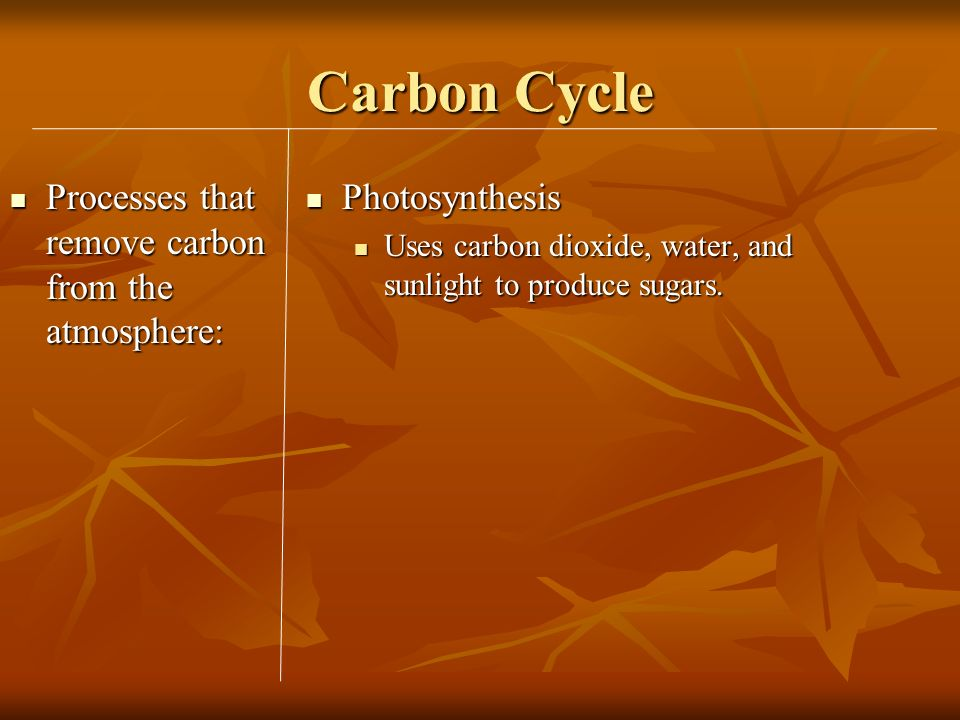 Carbon Cycle Processes that remove carbon from the atmosphere: