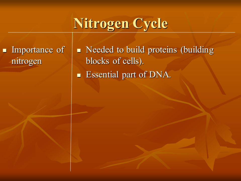 Nitrogen Cycle Importance of nitrogen