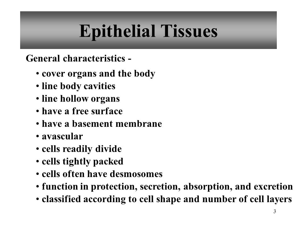Epithelial Tissues General characteristics - cover organs and the body