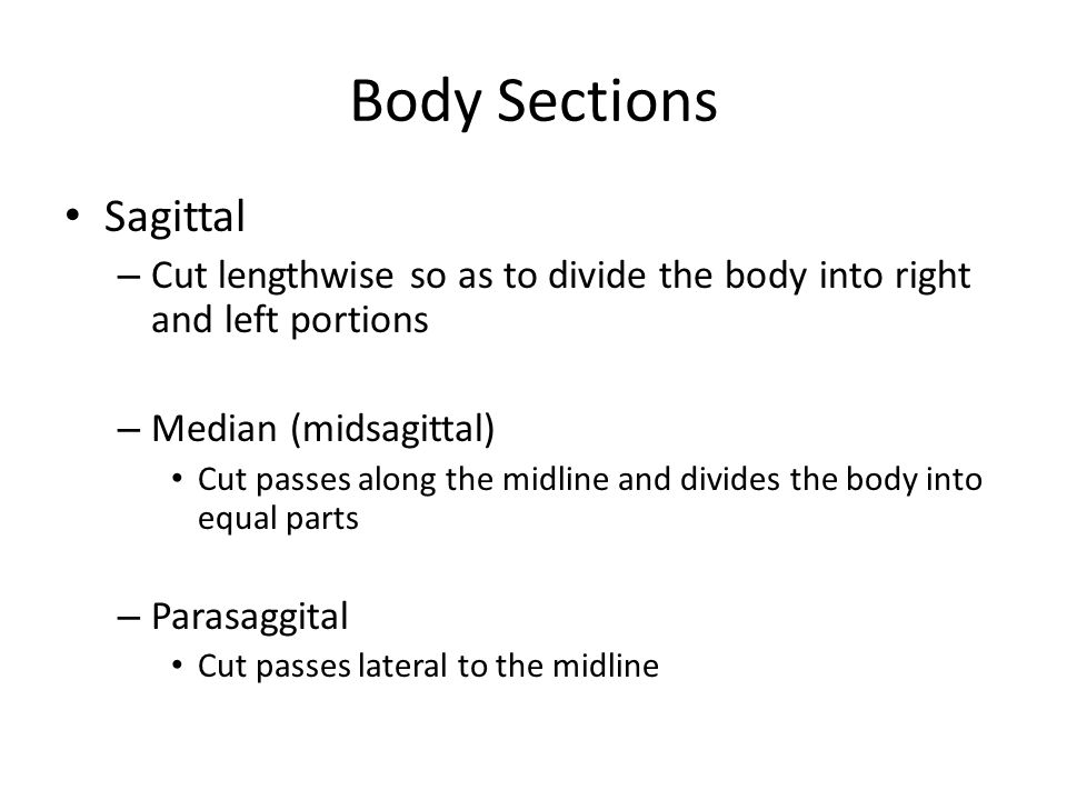 Body Sections Sagittal