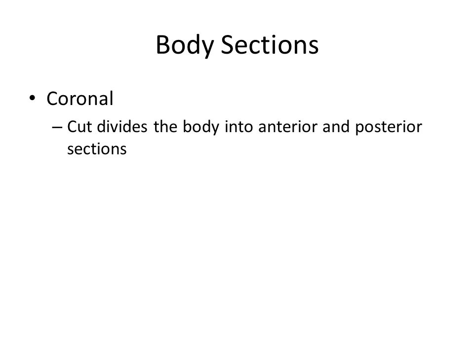 Body Sections Coronal Cut divides the body into anterior and posterior sections
