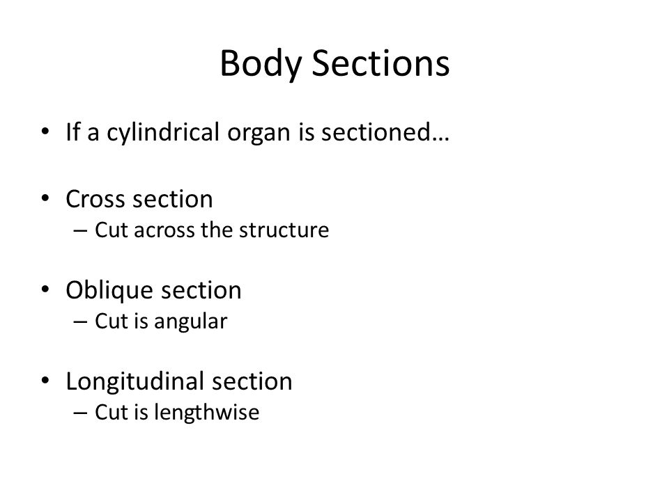 Body Sections If a cylindrical organ is sectioned… Cross section