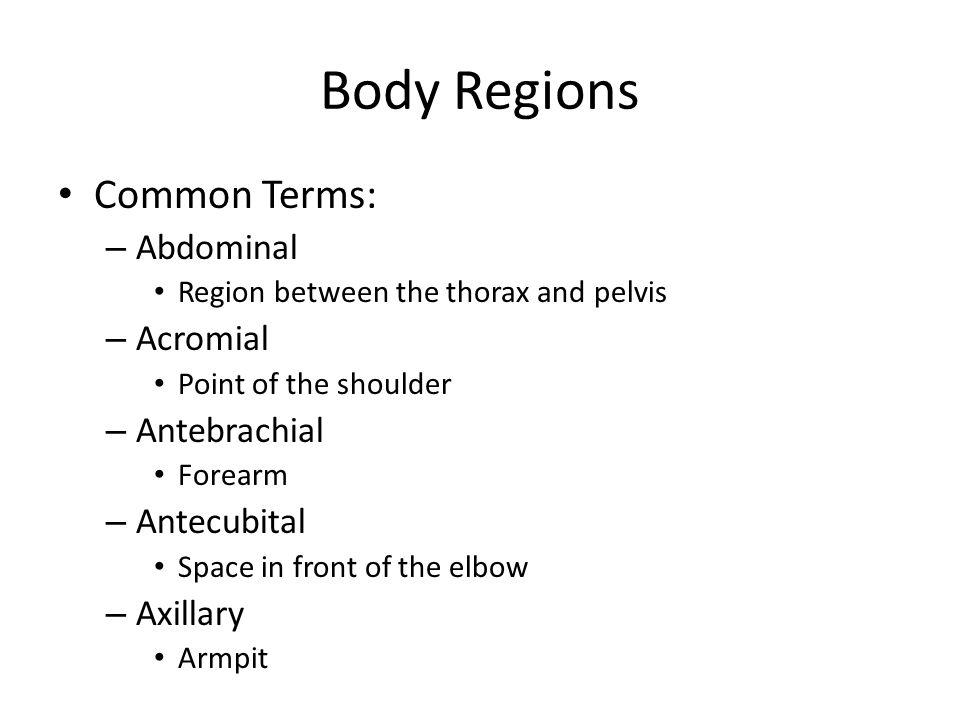 Body Regions Common Terms: Abdominal Acromial Antebrachial Antecubital