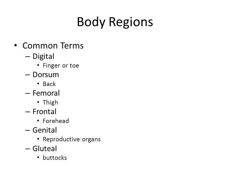 Body Regions Common Terms Digital Dorsum Femoral Frontal Genital