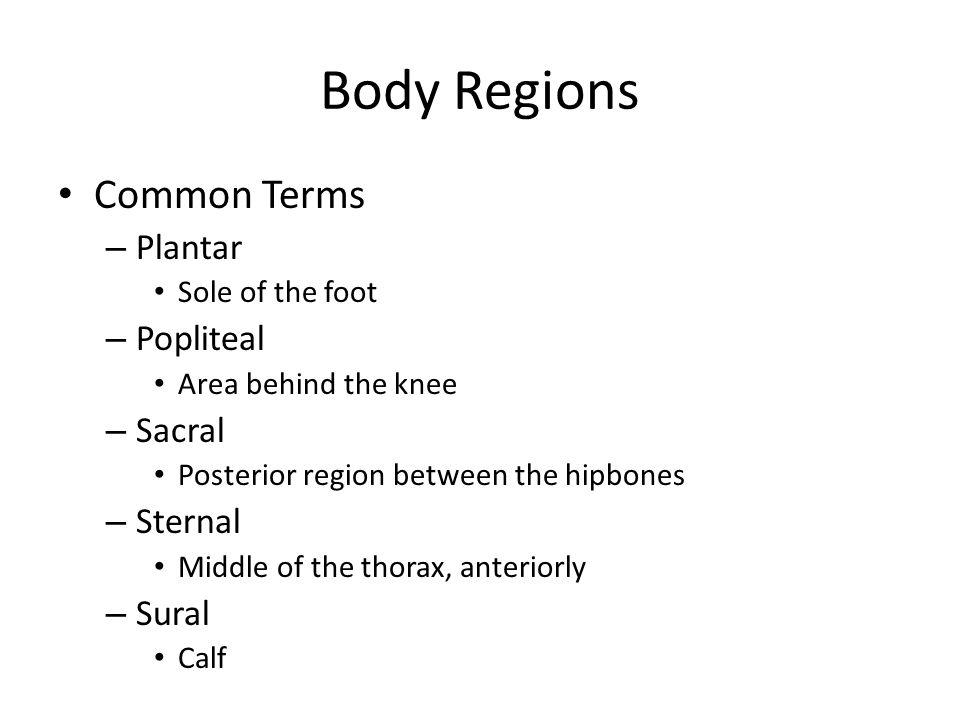 Body Regions Common Terms Plantar Popliteal Sacral Sternal Sural