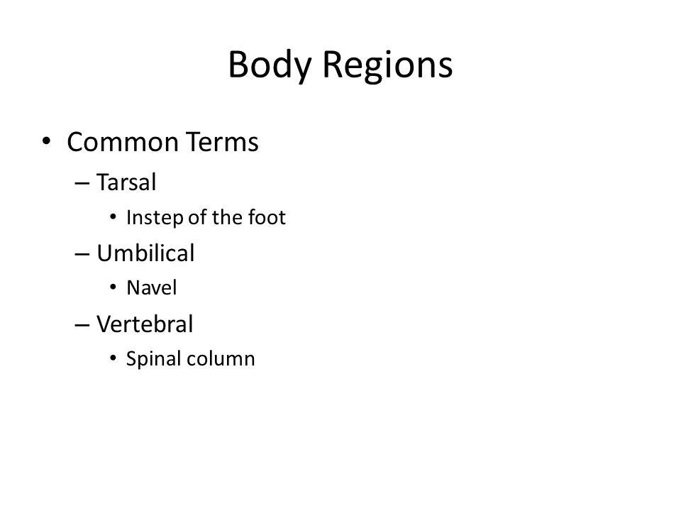 Body Regions Common Terms Tarsal Umbilical Vertebral