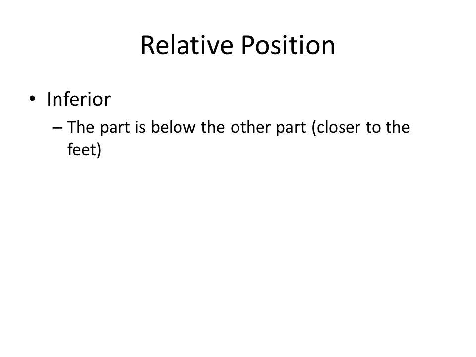 Relative Position Inferior