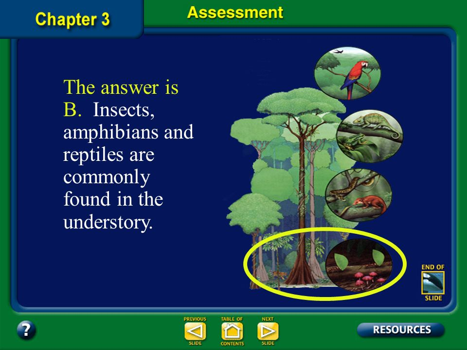 The answer is B. Insects, amphibians and reptiles are commonly found in the understory.