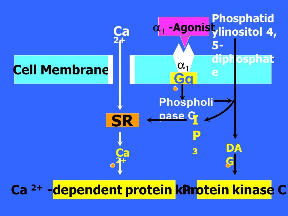 Protein kinase B