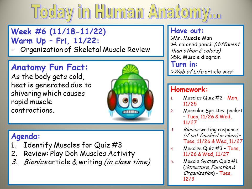today in human anatomy anatomy fun fact: week #6 (11/18-11/22, Muscles