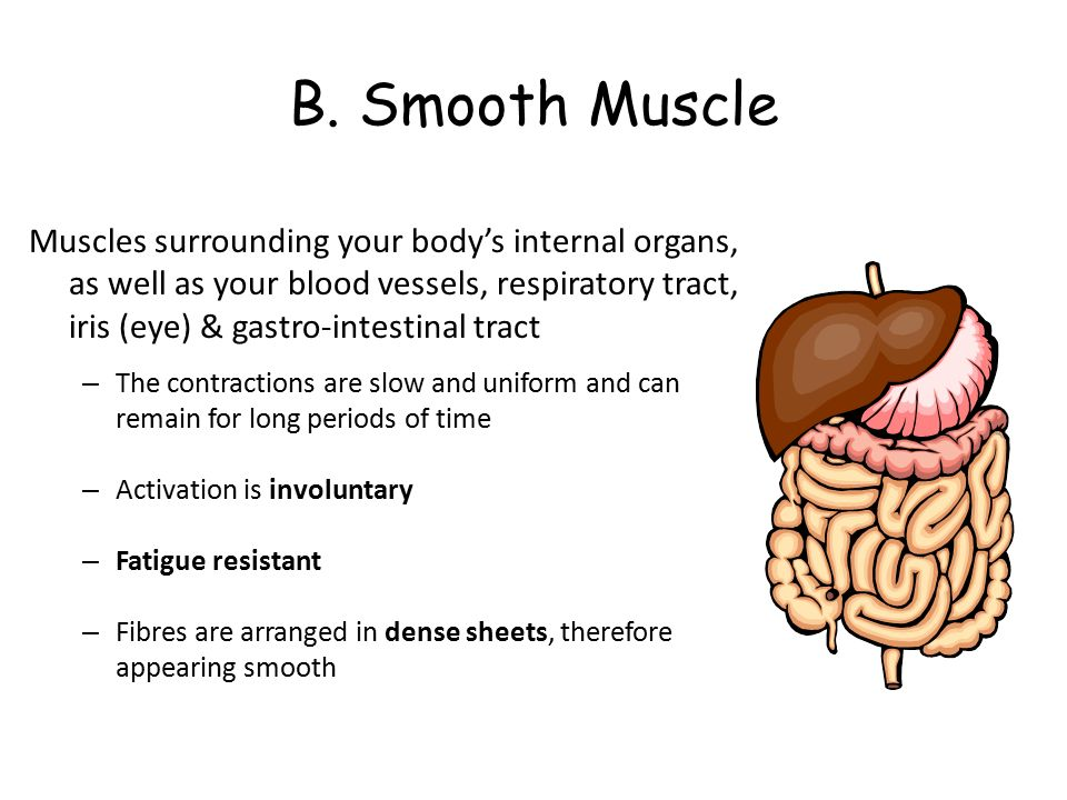 muscle structure and function - ppt video online download, Muscles