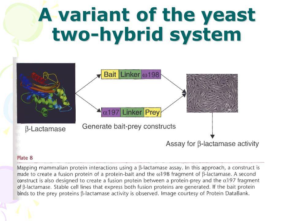 yeast two hybrid system pdf