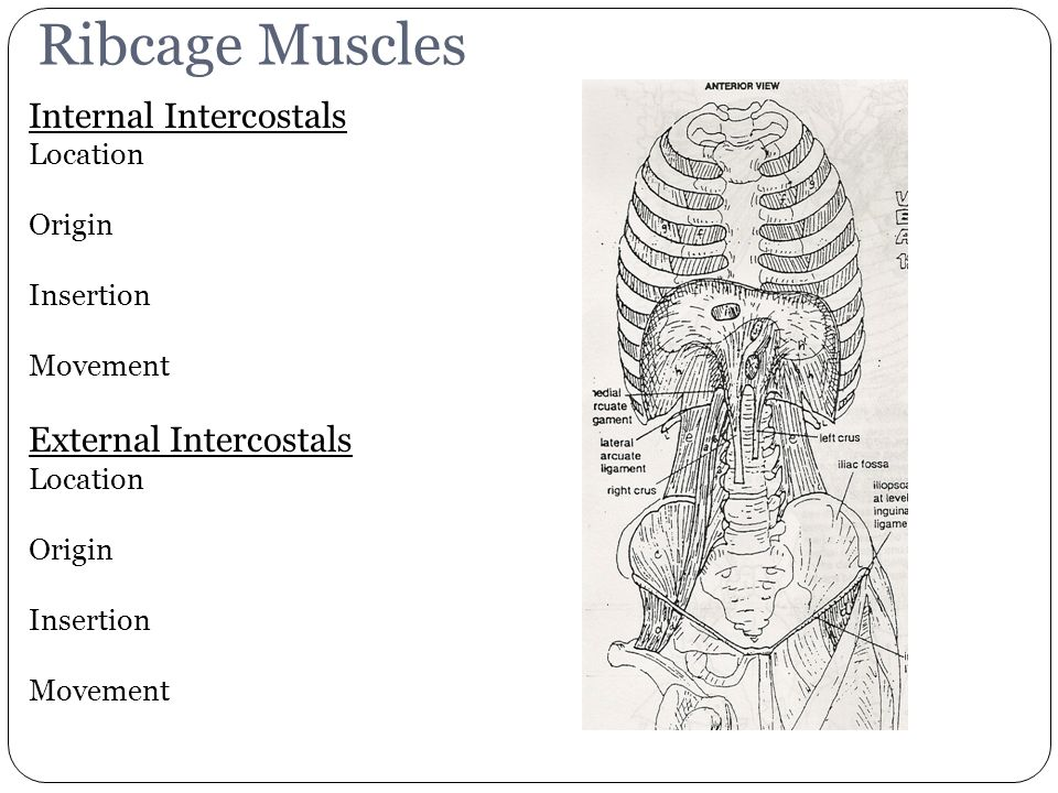Muscles. - ppt video online download
