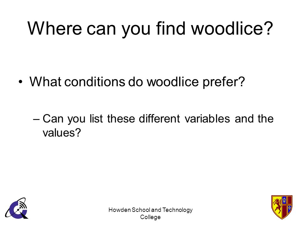 Where can you find woodlice